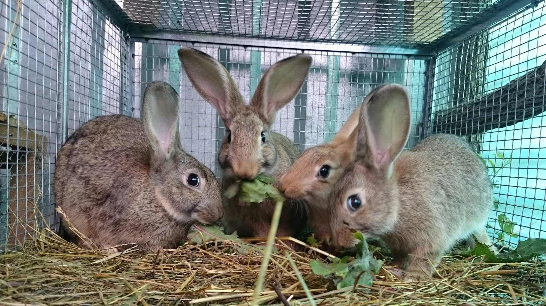 conigli animali allevamento dolomiti trichiana belluno b&b orto alpino