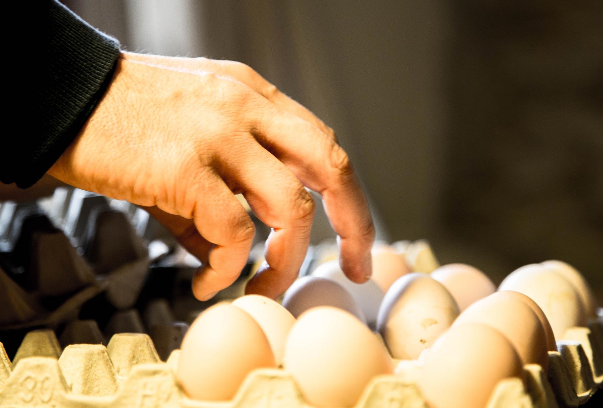 vivere fattoria uova natura ortoalpino belluno dolomiti